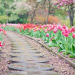 Low Budget Landscaping Ideas You'll Love